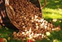 Орехи - лакомство для здоровья